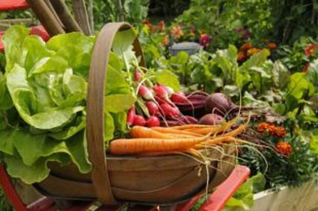 Как избавиться от пестицидов в овощах и фруктах. 4 универсальных способа