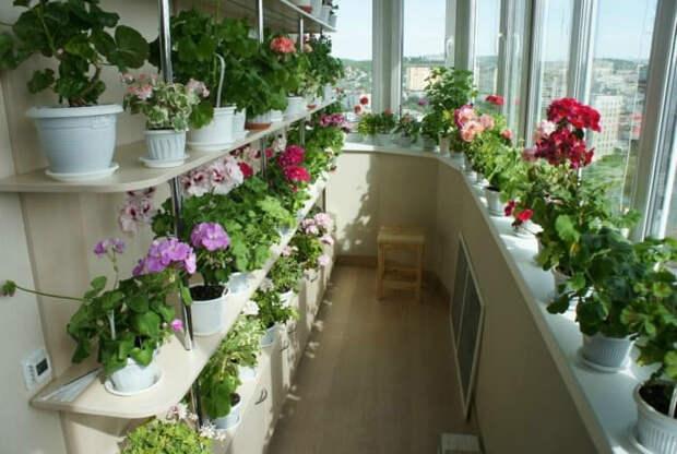Полки для цветов по периметру. | Фото: sad-semena.ru.