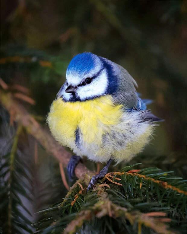 как выглядят птички Angry Birds в реальной жизни 7
