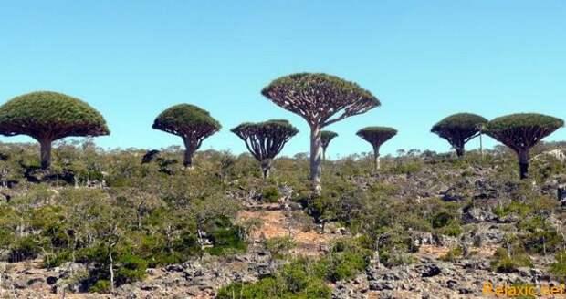 Socotra_007