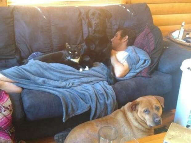 Фотографии безусловной любви домашних животных животные, коты, люди