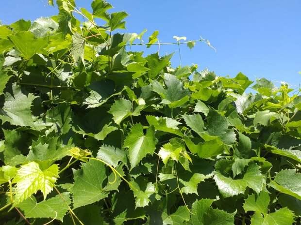 Травы-обереги для защиты дома