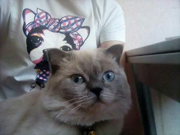 Котика любили, но недолго. Пока не постелили ковролин. ! Фото: Виктория, соцсети.