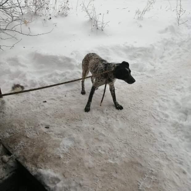 В Сарапуле спасли упавшую в гаражную яму собаку