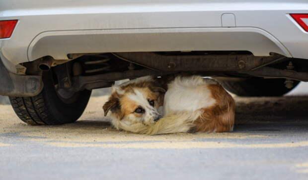 В Оренбурге неизвестная женщина выбросила собаку с пятого этажа