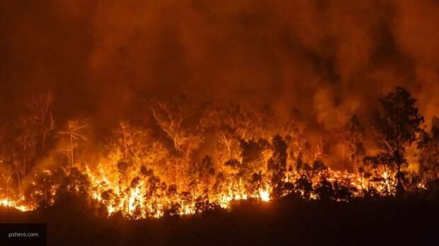 Число жертв лесных пожаров в США продолжает расти