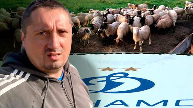 Прибыль как в такси: Коровы и бараны спасли русскую деревню