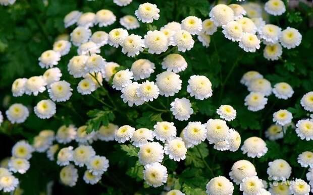 Февраль: посевы цветов и закладка семян на стратификацию