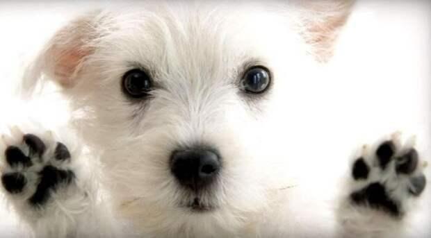 Топ лайфхаков для владельцев собак: должен знать каждый