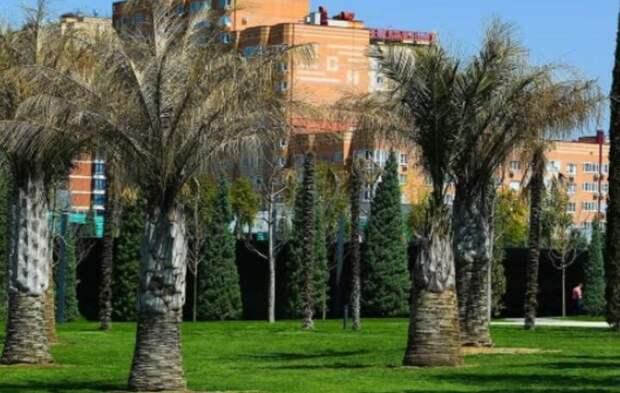В парке «Краснодар» высадили шесть слоновьих пальм