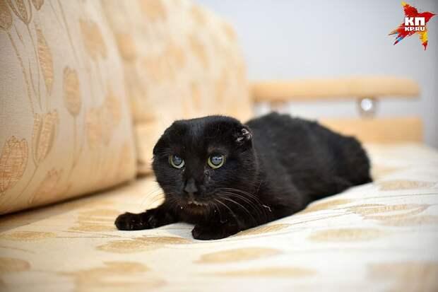 У кошки Марго из-за болезни нет зубов, и каждые полчаса ей нужно принимать лекарства. Фото: Влад КОМЯКОВ