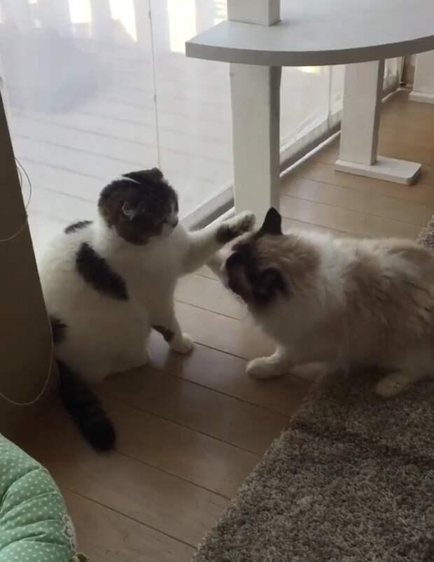 КОШАЧЬИ НОВОСТИ. Мурка и крольчонок, Самый страшный кот, Ленивая драка