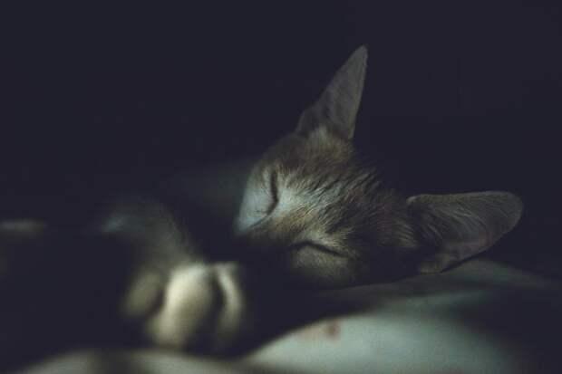 Хронический недосып подавляет иммунную систему