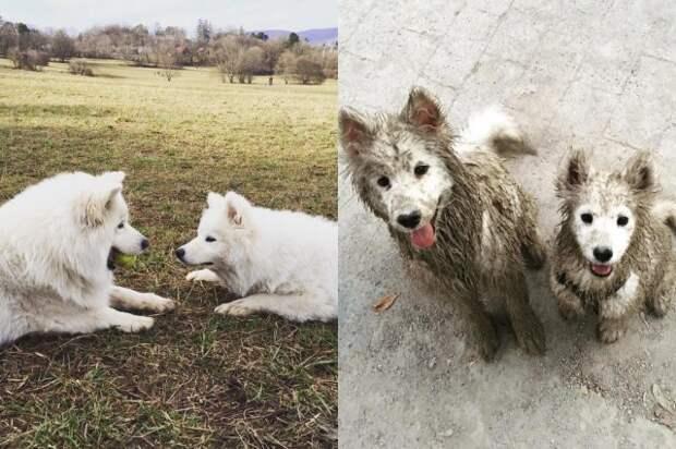 Когда решил отпустить собаку во время прогулки