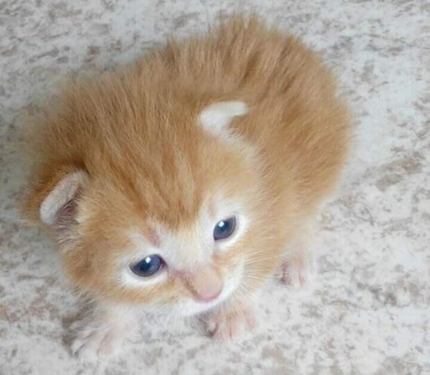Барсик - кот из ниоткуда