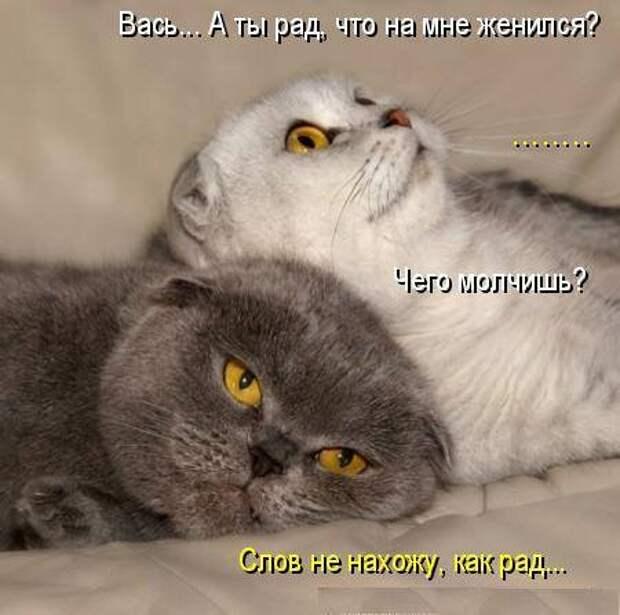 Был бы у меня такой кот... Улыбнемся))