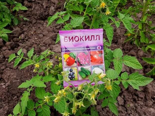 Биокилл защитит сад и огород от вредителей