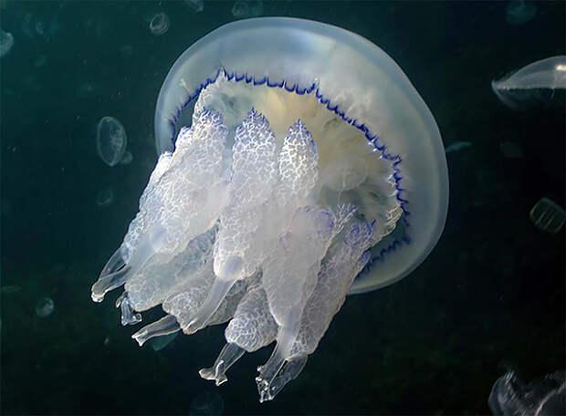 Если ужалила медуза: что можно и чего нельзя делать