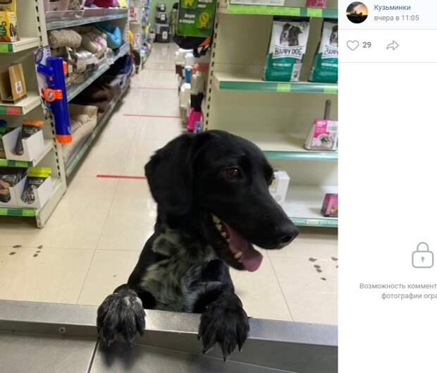 Бездомный пес нашел приют в зоомагазине на Зеленодольской