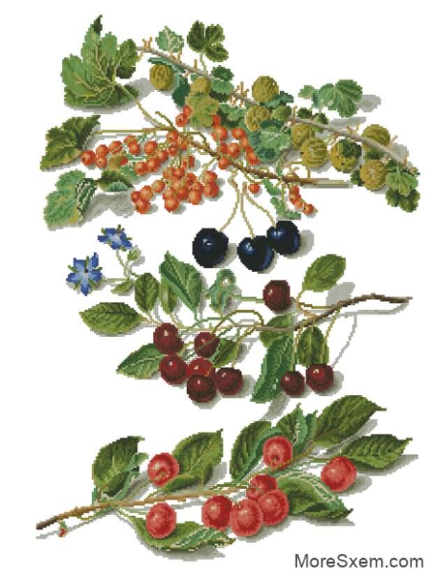 Ветки ягод
