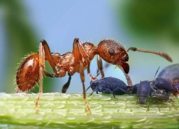 Потрясающие макро фотографии словацкого фотографа Ондрея Пакана капли, макро, мухи, насекомые, фотографии