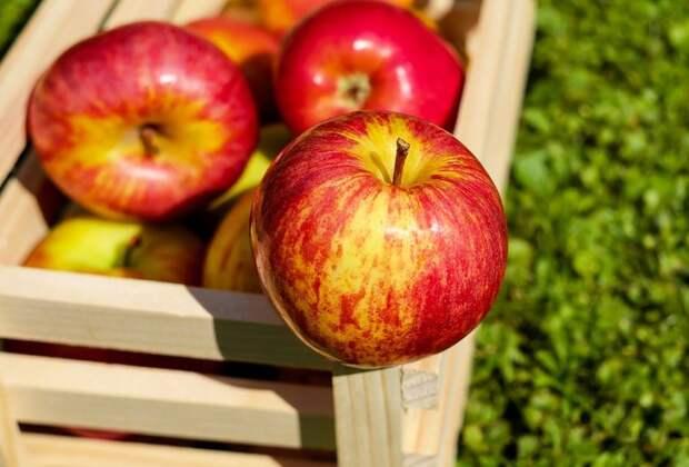 Яблочный Спас отметили пенсионеры из Коптево