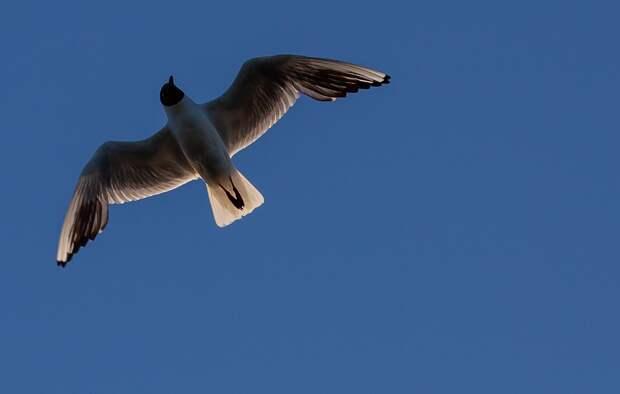 На Долгие пруды после зимы прилетели чайки