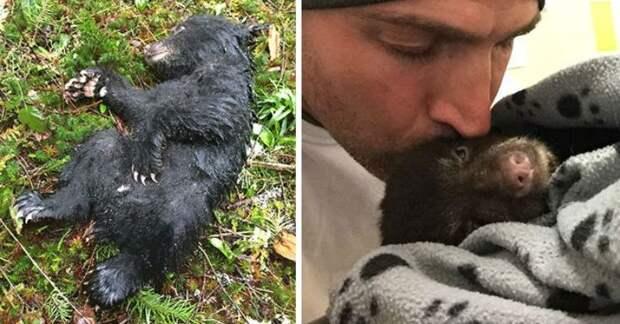 Рискуя попасть за решетку, фотограф спас еле живого медвежонка
