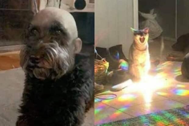 10+ необычных фото животных, которые смешат и пугают одновременно