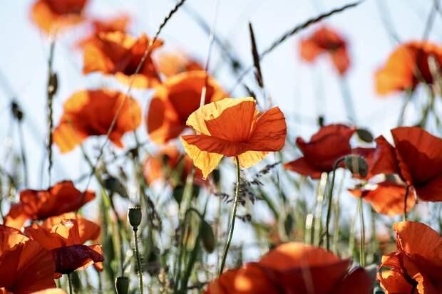 Ваш счастливый цветок согласно знаку Зодиака