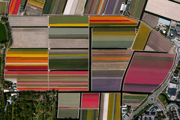 Поля с тюльпанами, Нидерланды