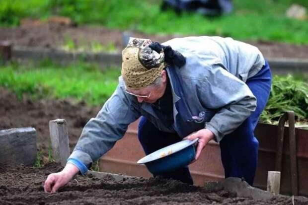 Золовка забирает у свекрови урожай с дачи и отдает деньги