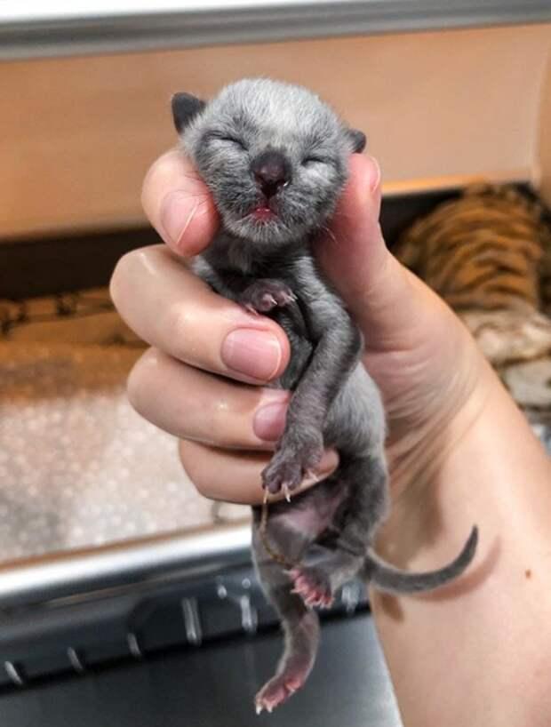 Кошка носилась от необыкновенной сиротки в инкубаторе - назад, к своим кровным четырём котятам