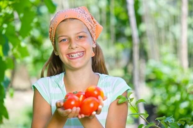 Скороспелые сорта - ранний урожай