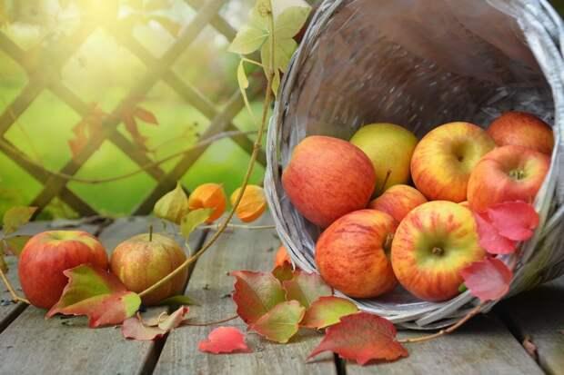 В храме Всех Святых на Соколе состоится освящение яблок