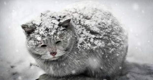 Меркантильные и жестокие наследники! Они знают, почему в нашем дворе так много бездомных кошек…