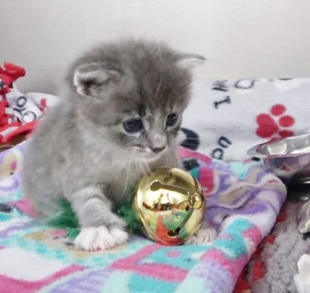 Кошка уронила котенка, убегая из дома. Крошка застрял в стене и его нужно было спасать