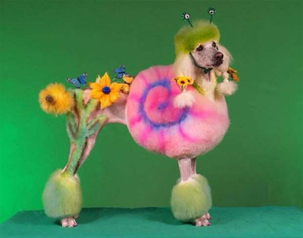 """""""Чудо-юдо-кото-пёс!"""" Окрашивание животных: надо ли оно вашему питомцу?"""