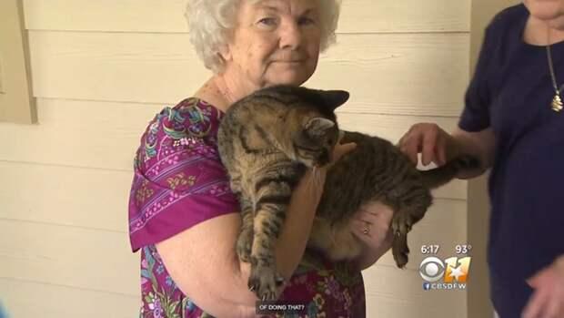 Старушка думала, что кот зовет её на прогулку, но всё было куда серьезнее! Это невероятно!