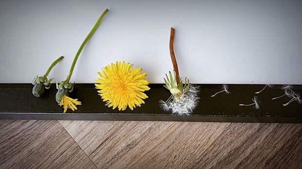 Люди делятся фотографиями жизненных циклов растений и других живых существ
