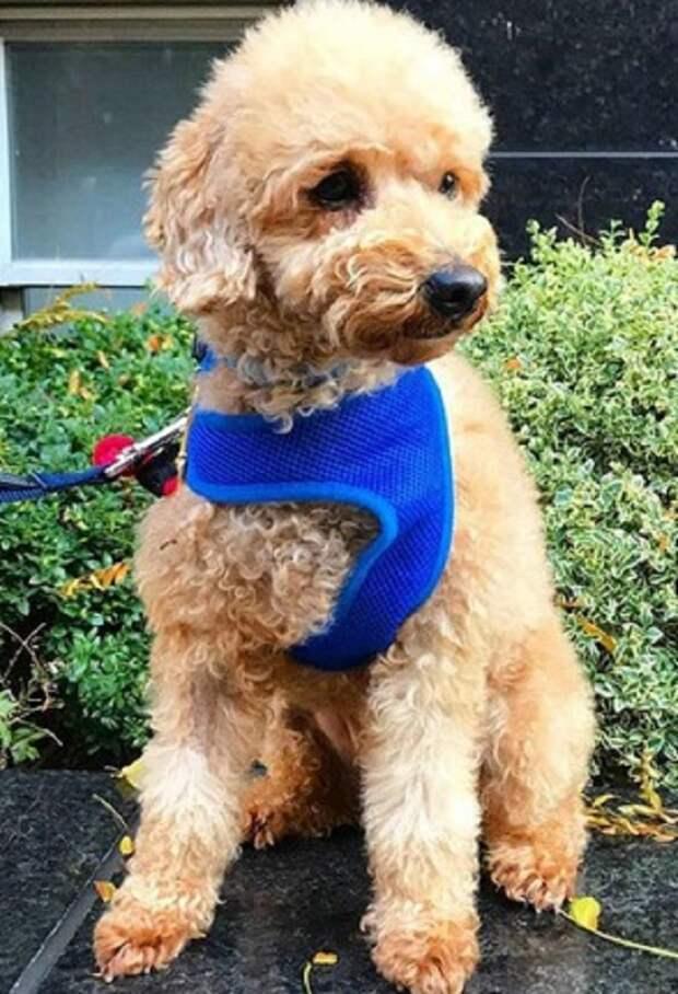 Пса планировали усыпить, и уже была назначена дата, но добрые люди успели спасти его раньше, чем она наступит