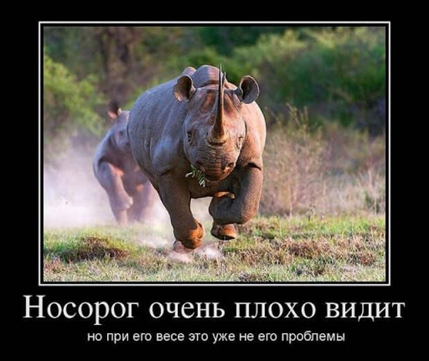 Демотиваторы про животных: смешные