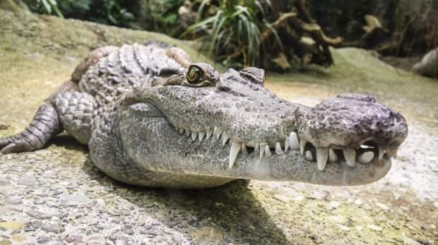 В Зимбабве 11-летняя девочка выколола крокодилу глаза, спасая подругу