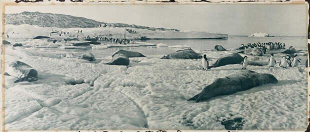 Первая Австралийская антарктическая экспедиция в фотографиях Фрэнка Хёрли 1911-1914 5