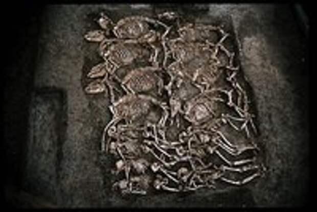 Воины-псы действительно существовали