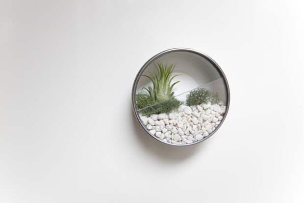 Вертикальный сад дома: террариумы из нержавейки