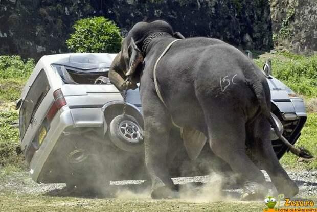 http://zeze.ro/images/poze-haioase/Elefant_suparat.jpg