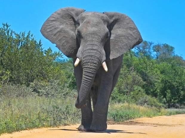 Слоны прогулялись по улицам Питера (фото)