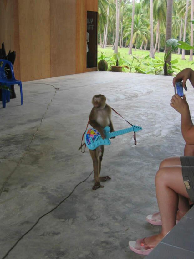 16 смешных фото, демонстрирующих, что делают домашние животные, когда никто не видит
