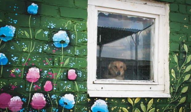 ВТатарстане суд оштрафовал хозяина собаки, напавшей наребенка, на10 тысяч рублей